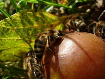 abeillesblog001.jpg