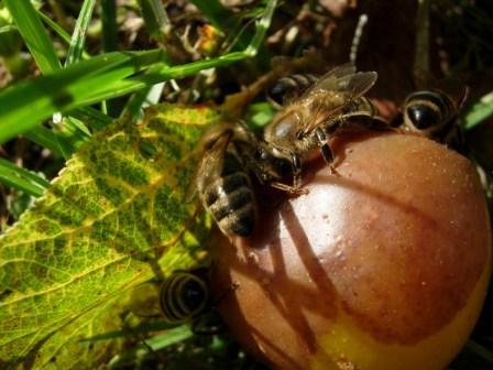 abeillesblog005.jpg
