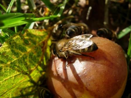 abeillesblog007.jpg
