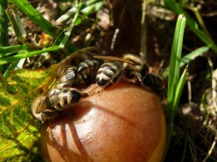 abeillesblog008.jpg