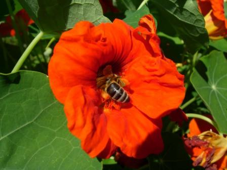 abeillesblog0111.jpg