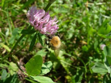 abeillesblog013.jpg