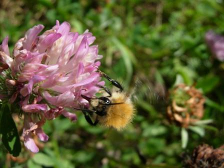 abeillesblog014.jpg