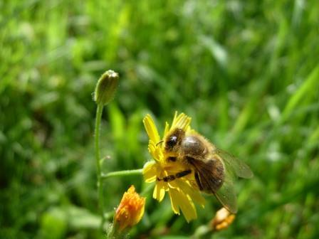 abeillesblog018.jpg