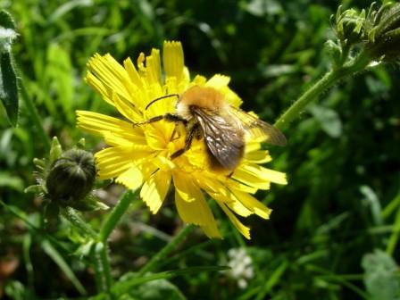 abeillesblog021.jpg
