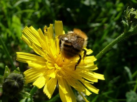 abeillesblog022.jpg